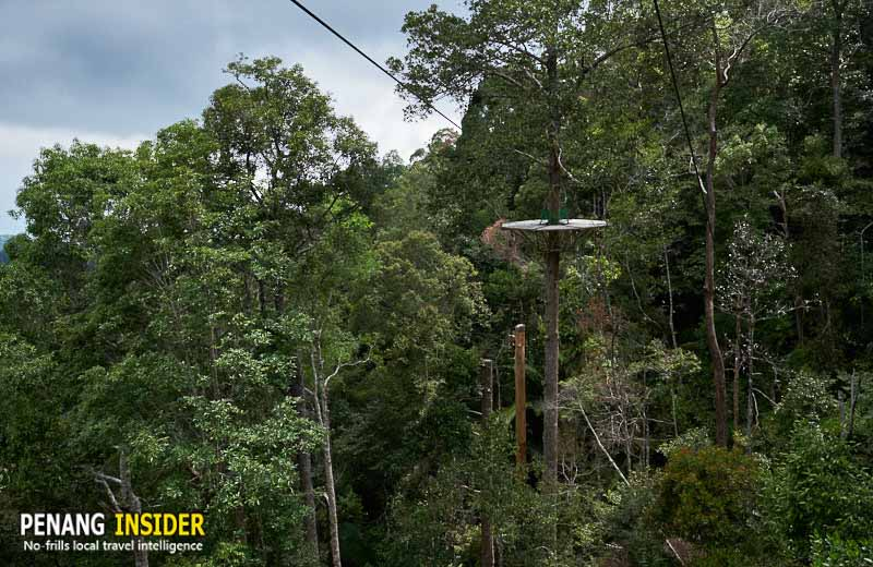 penang-hill-zipline-flight-colugo