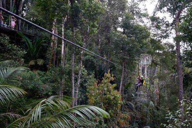 zipline_penang_hill_colugo_the_habitat