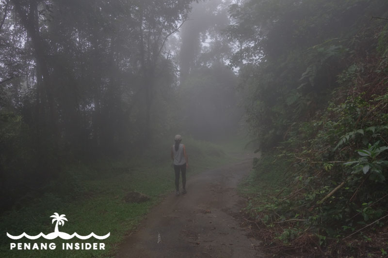 standing in the mist of Bukit Larut in Taiping