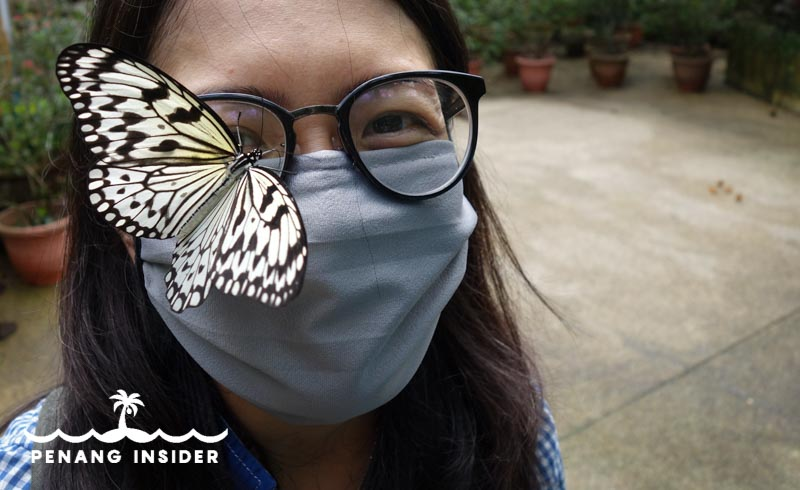 Entopia butterfly on woman glasses