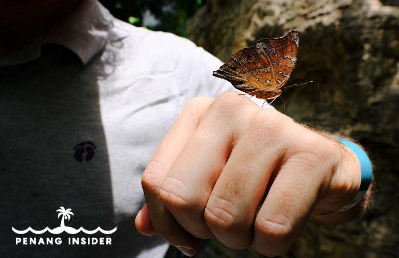 Butterfly on hand at Entopia Penang Butterfly Farm
