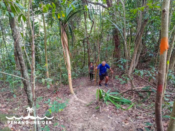 The final part of the ascent to Cow Hill up from Bukit Hijau's pond